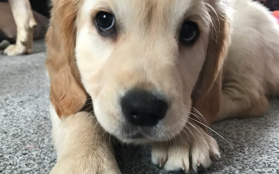 The Power of Puppy Love